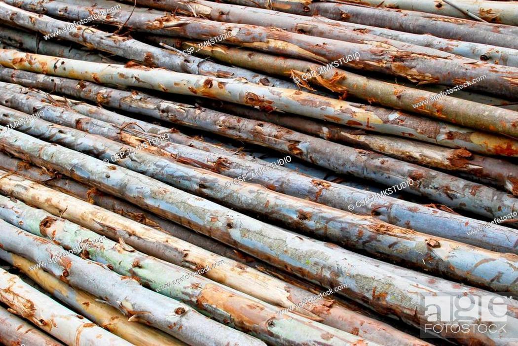 Imagen: pile of wood in logs storage.