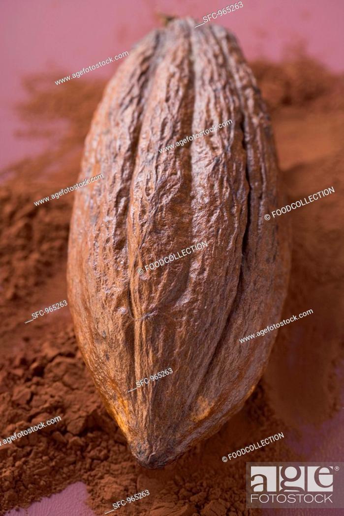 Stock Photo: Cacao fruit on cocoa powder.