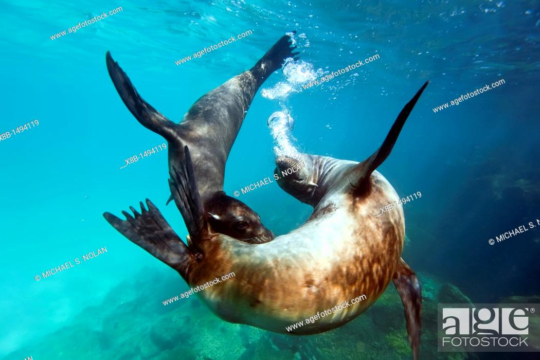 imad takes us undersea in the galapagos This article is part of wikiproject evolutionary biology, an attempt at building a useful set of articles on evolutionary biology and its associated subfields such as population genetics, quantitative genetics, molecular evolution, phylogenetics, and evolutionary developmental biology.