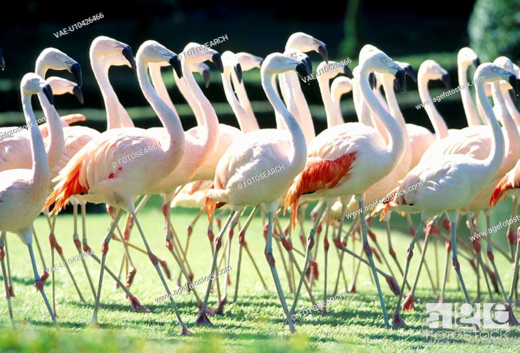 Stock Photo: Flamingo.
