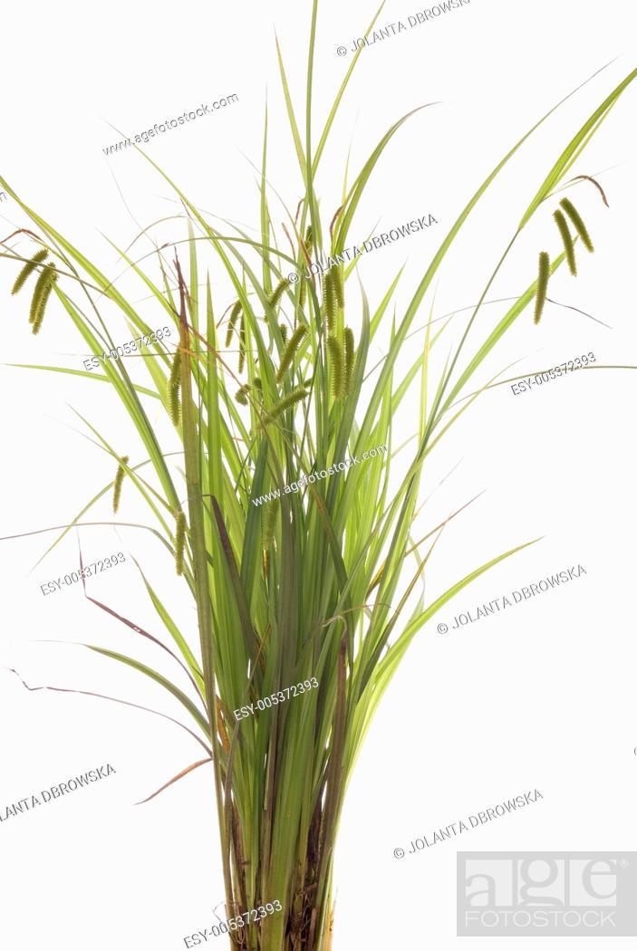Stock Photo: grass.