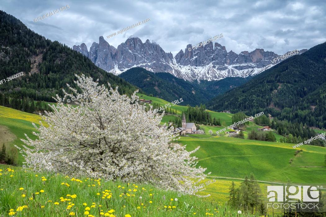 Stock Photo: Funes Valley, Dolomites, South Tyrol, Italy. Spring in Santa Maddalena in Funes Valley and the peaks of Odle in the background.