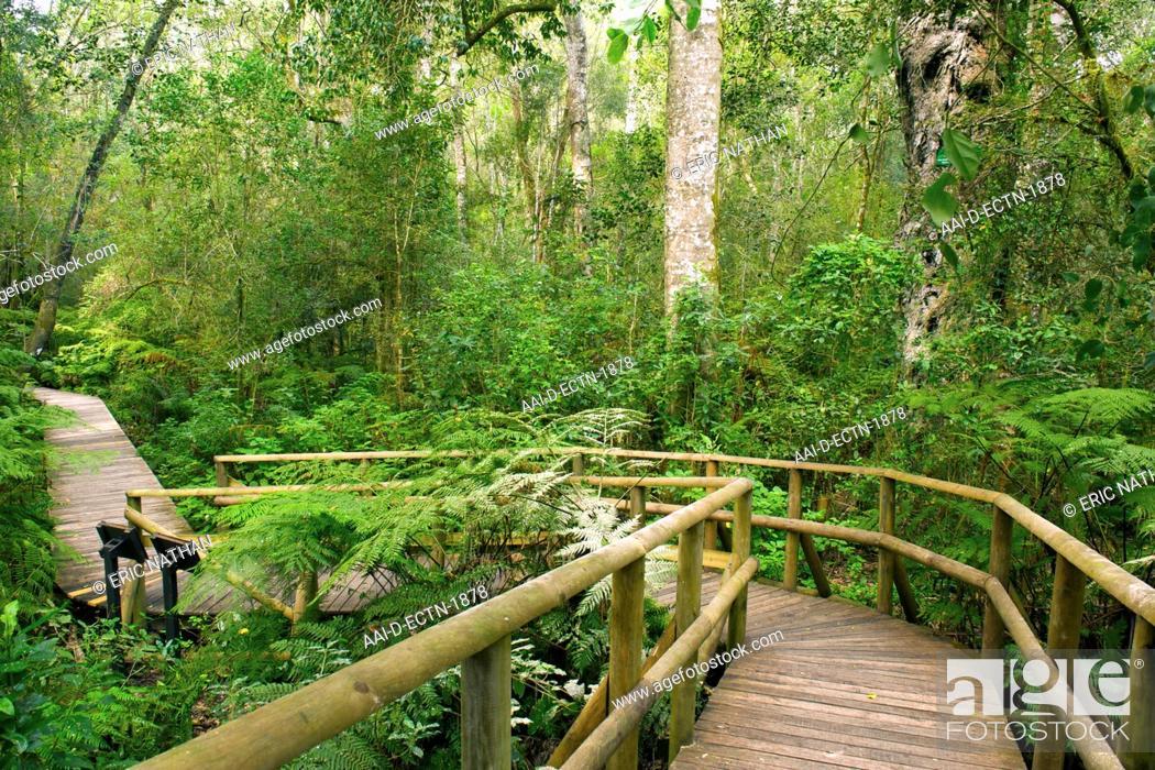 The Garden Of Eden Forest Walk In The Tsitsikamma Forest Near Plettenberg Bay On The Garden
