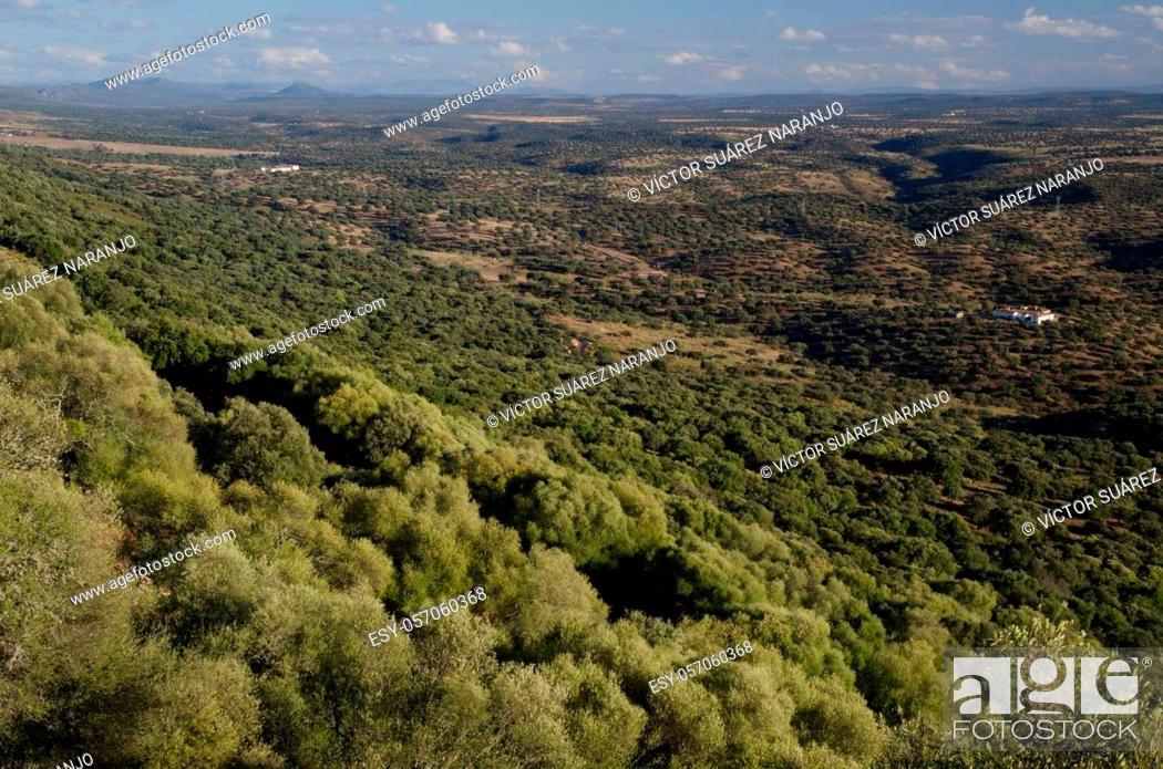 Imagen: Mediterranean forest in the Monfrague National Park. Caceres. Extremadura. Spain.