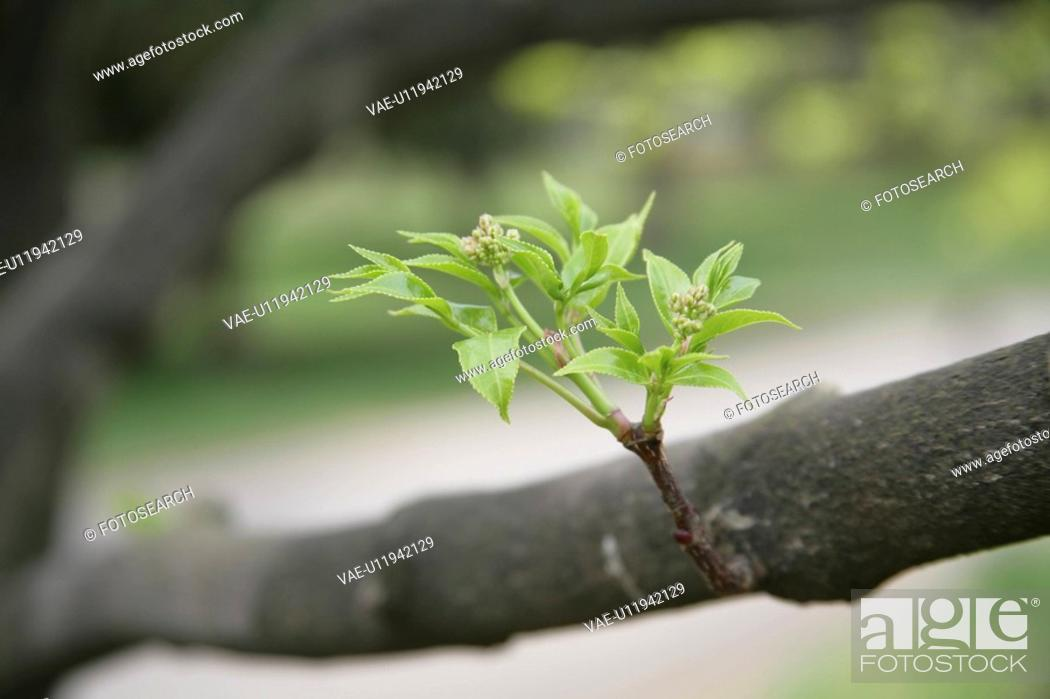 Stock Photo: Sprout.