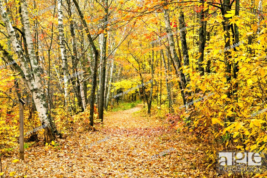 Photo de stock: Colorful fall foliage along trail through Banning State Park.