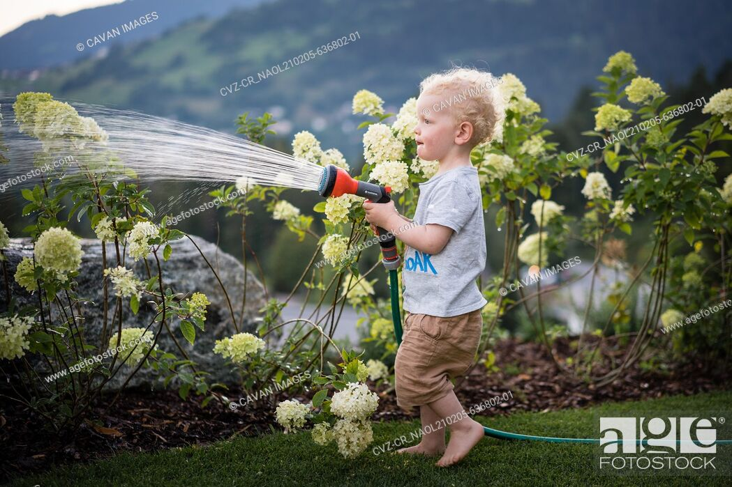 Stock Photo: A boy standing barefoot on the grass watering hydrangeas.