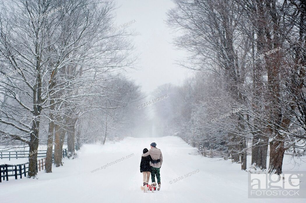 Stock Photo: Romantic young couple walking dog in snow covered forest, rear view, Ontario, Canada.