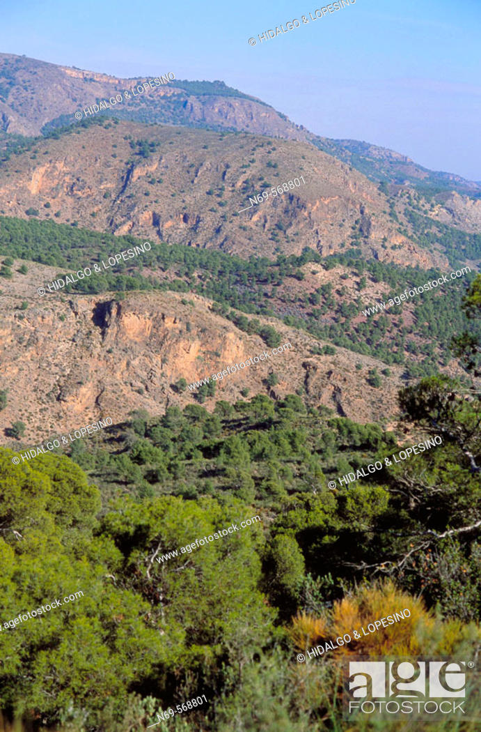 Stock Photo: Sierra de Espuña Natural Park. Murcia province. Spain.