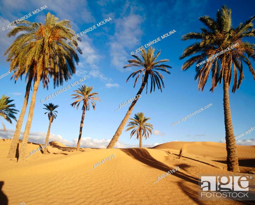 Stock Photo: Desert. Tunisia.