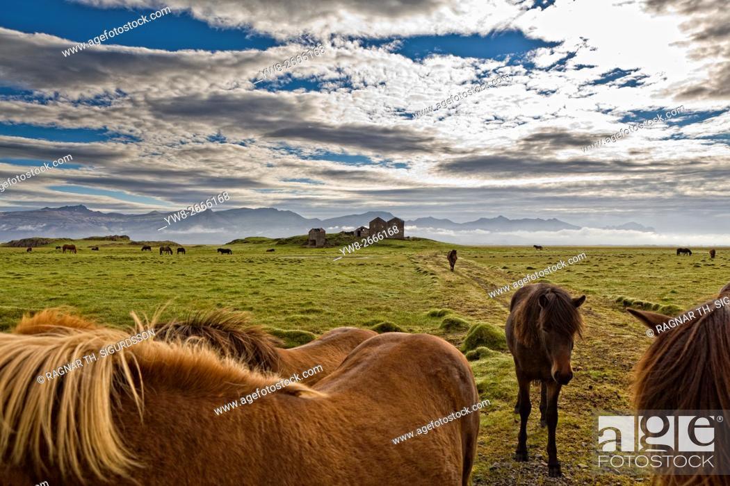 Stock Photo: Horses grazing by Vidbordssel- abandon farm, Hornafjordur, Iceland.