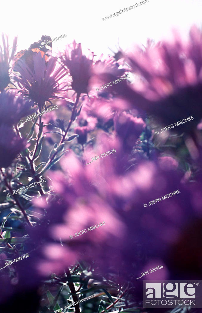 Stock Photo: Pink flowers in the garden.