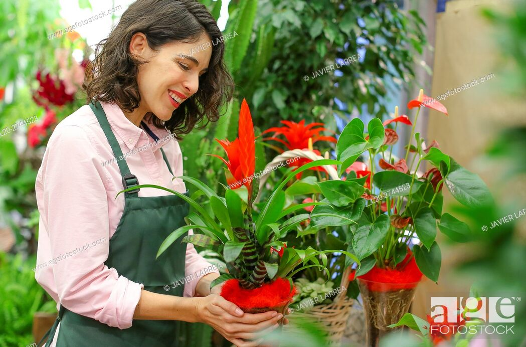 Stock Photo: Florist in flower shop.