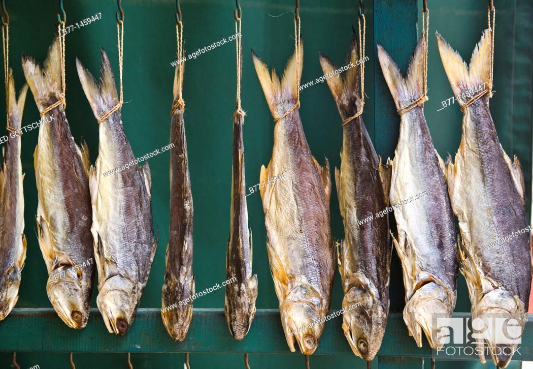 Stock Photo: China, Macau, Coloane Island, Coloane Village, drying fish.