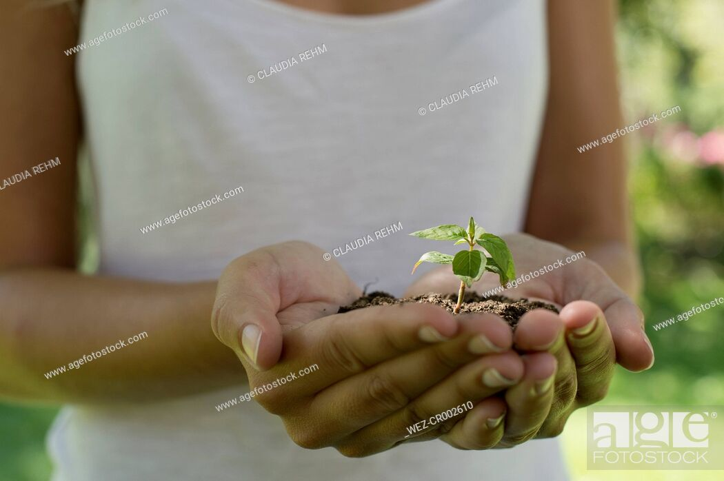 Stock Photo: Germany, Human hands holding seedling.