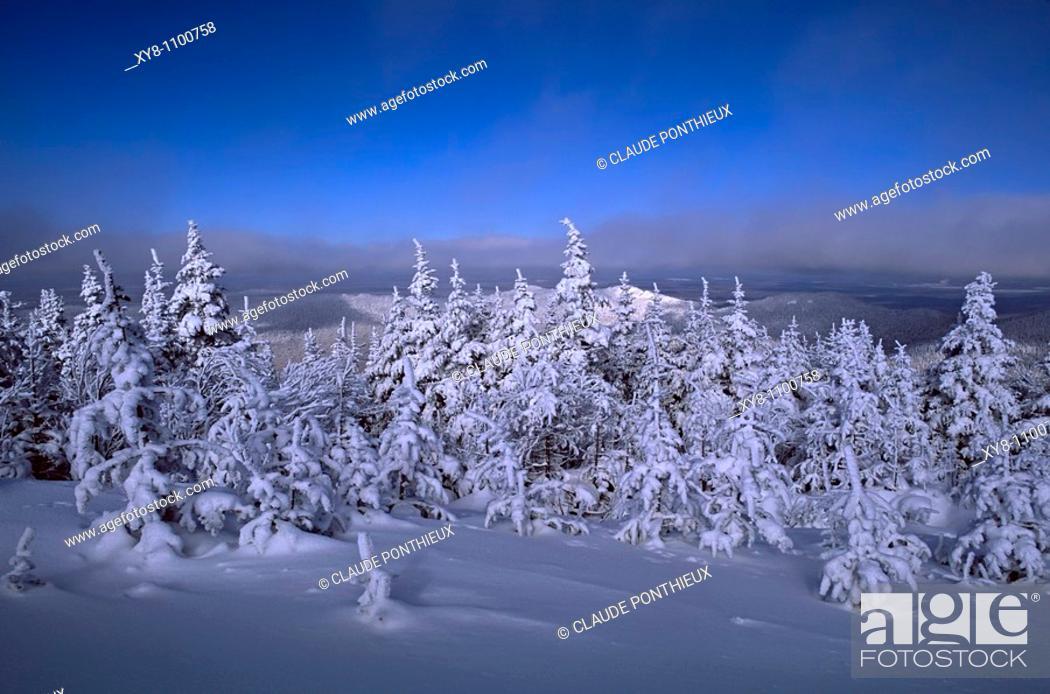 Stock Photo: Snow-covered-trees, Mount-Mégantic-National-Park, Québec, Canada.