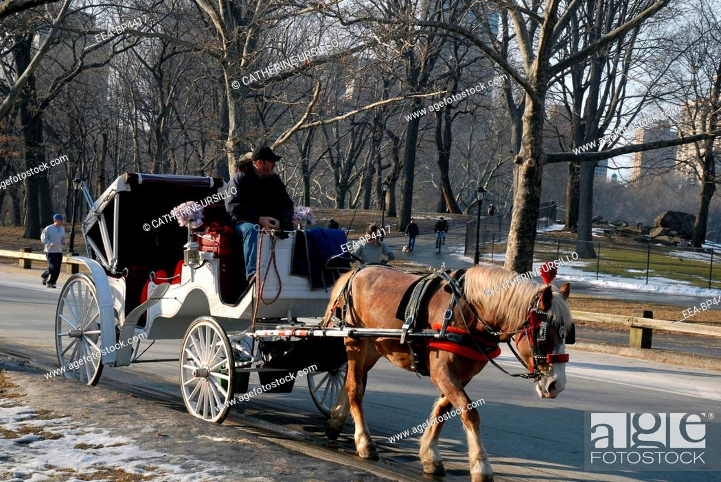 Stock Photo: Horsedrawn carriage in Central Park, New York City.