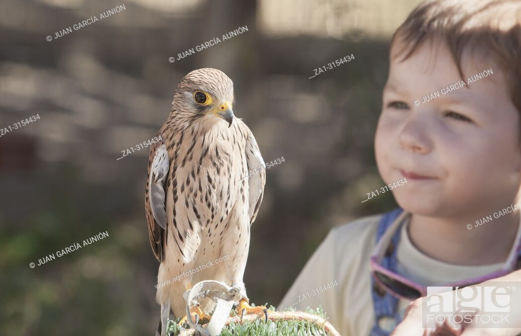 Imagen: Child boy with wounded Lesser kestrel at bird rescue center. Environmental education for children concept.