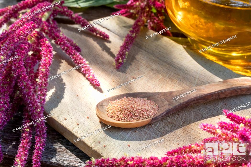 Stock Photo: Amaranthus caudatus seeds, flowers and oil.