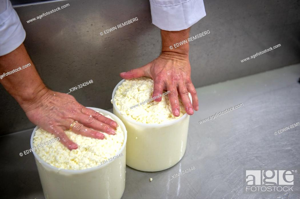 Imagen: A man's hands pushing down cheese curd into plastic molds, Radom, Masovian Voivodeship, Poland.