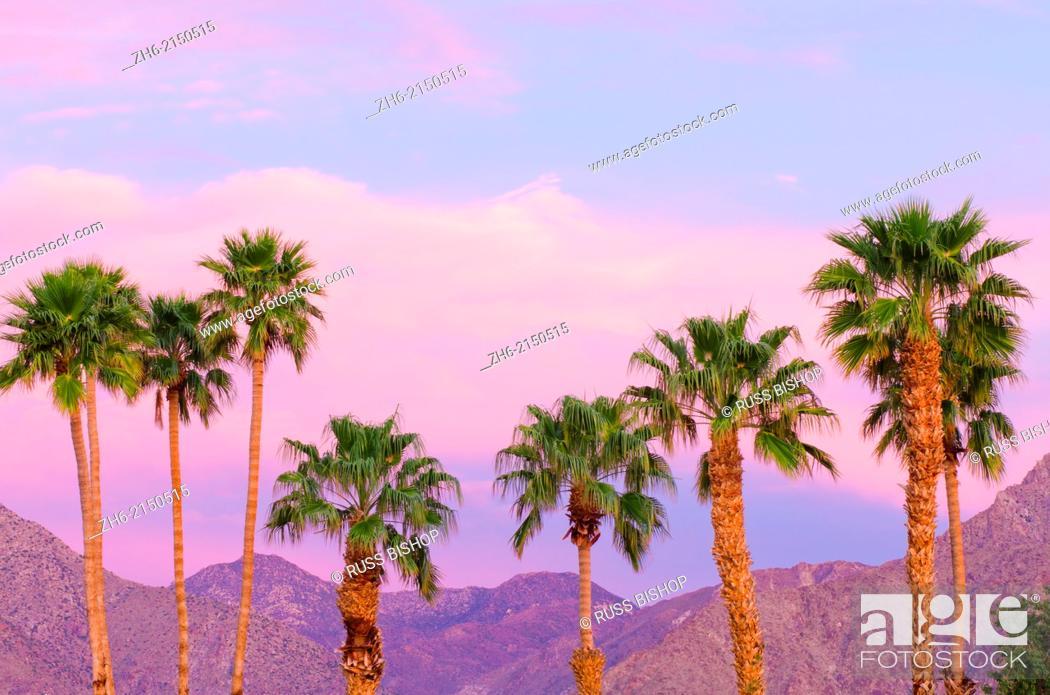 Stock Photo: California Fan Palms under San Ysidro Mountain, Anza-Borrego Desert State Park, California USA.
