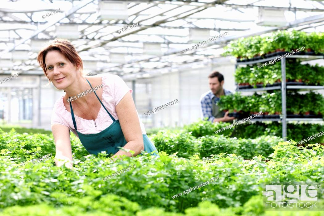 Stock Photo: Germany, Bavaria, Munich, Mature woman in greenhouse between parsley plants, man standing in background.