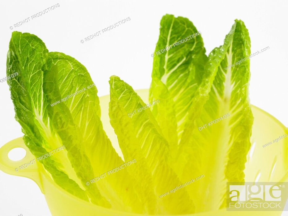 Stock Photo: Raw Food, Salads, Chinese Leaves.