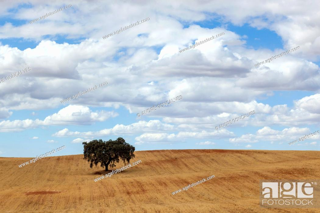 Stock Photo: Alentejo, Portugal.