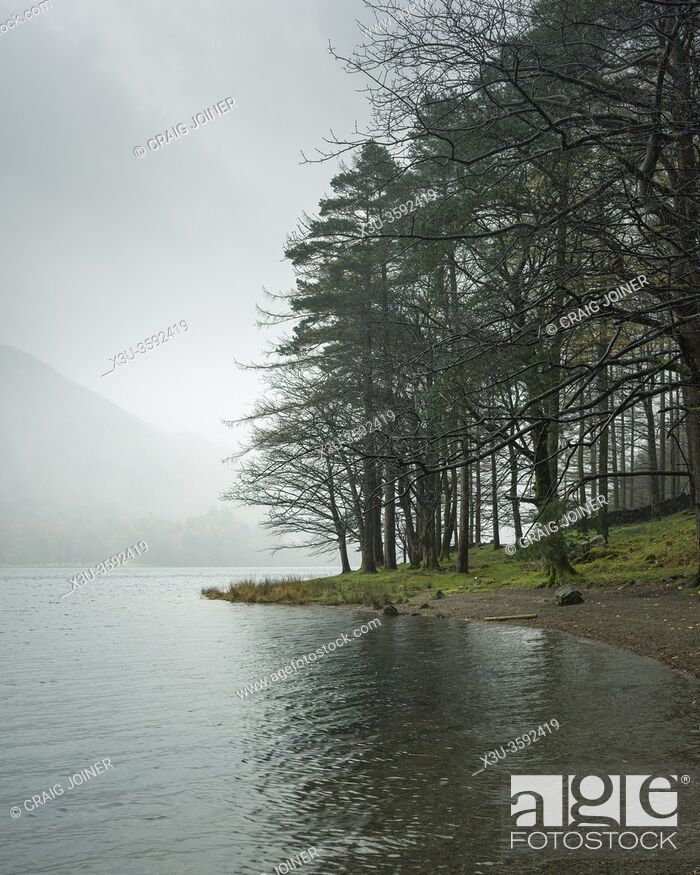 Imagen: Burtness Wood on the shore of Buttermere in the Lake District National Park, Cumbria, England.