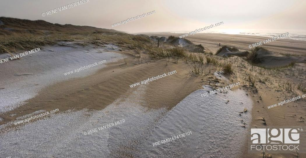 Stock Photo: Typical dunes landscape near Egmont aan Zee, North-Holland, The Netherlands, Europe.