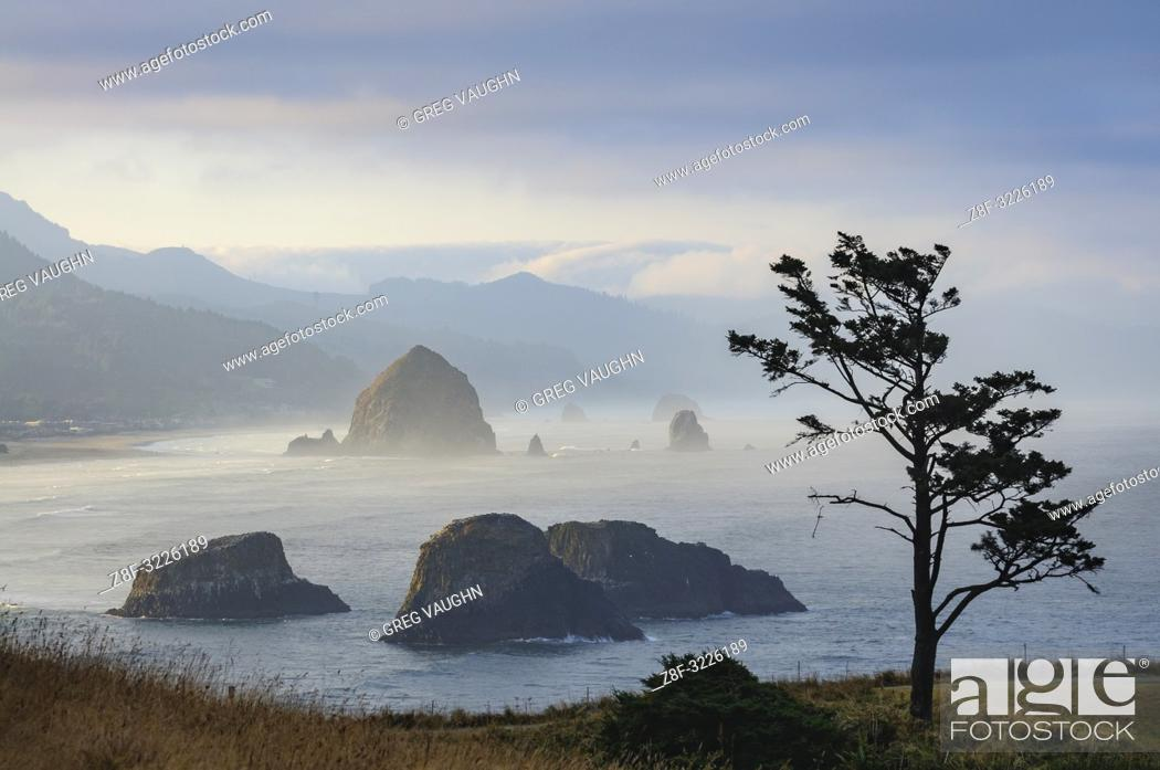 Imagen: Shore pine and view to Haystack Rock in Cannon Beach from Ecola State Park, northern Oregon Coast.