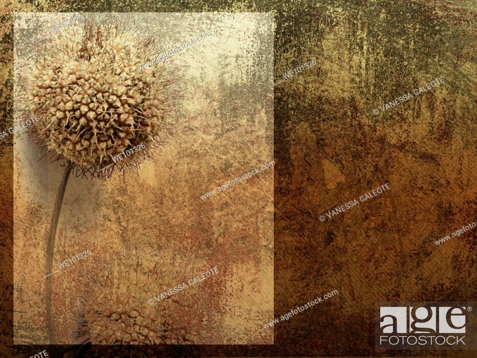 Stock Photo: Old wall With dried flower and wall texture.
