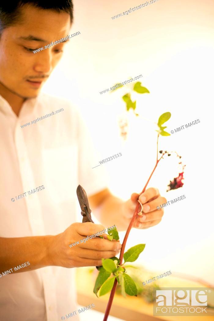 Stock Photo: Japanese man standing in flower gallery, working on Ikebana arrangement.