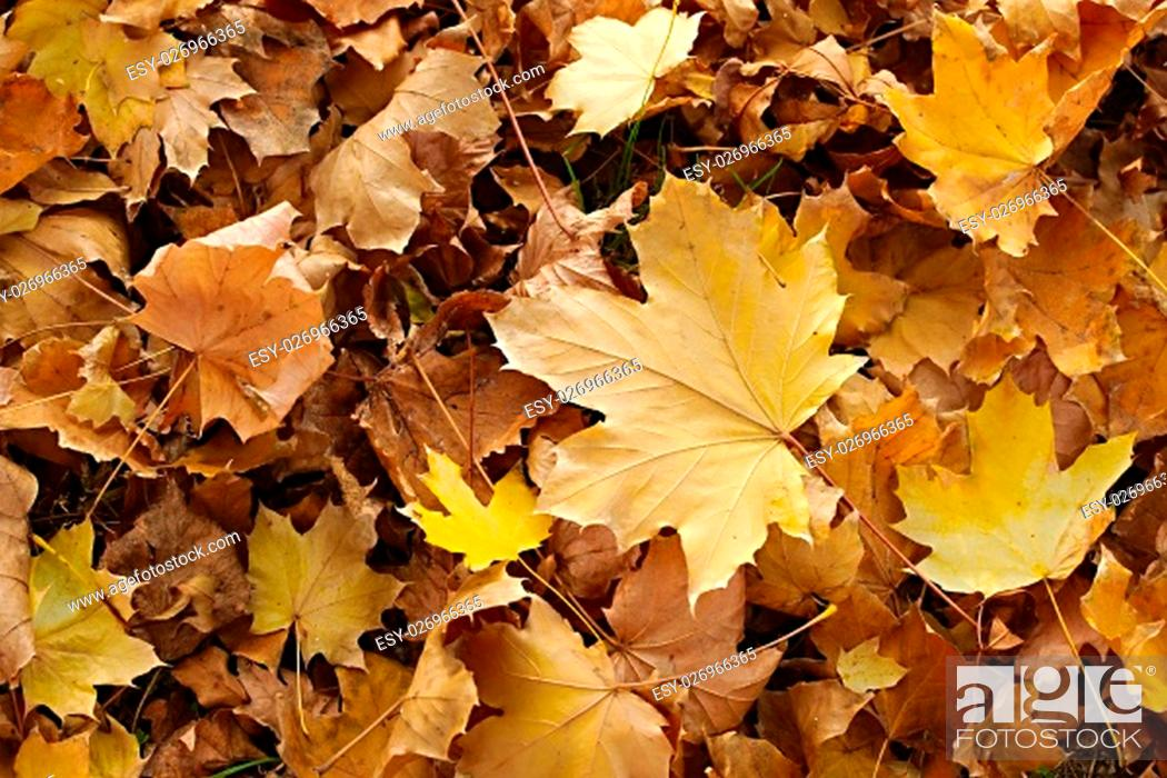 Photo de stock: Fallen leaves on the ground.