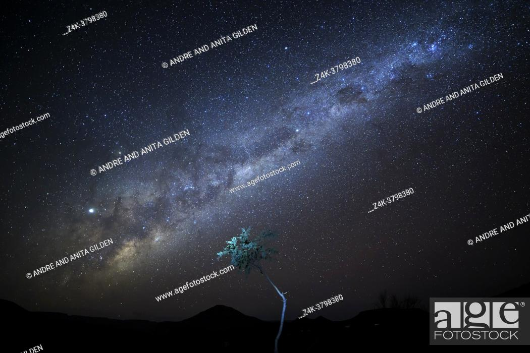 Imagen: Nightsky with milky way over Namibian desert with tree lit, Damaraland, Namibia.