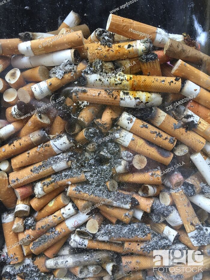 Photo de stock: Discarded Cigarette Butts in a Transparent Pavement Bin . . . .