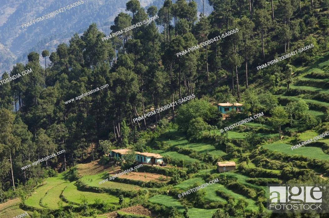 Stock Photo: High angle view of terraced fields, Patnitop, Jammu And Kashmir, India.