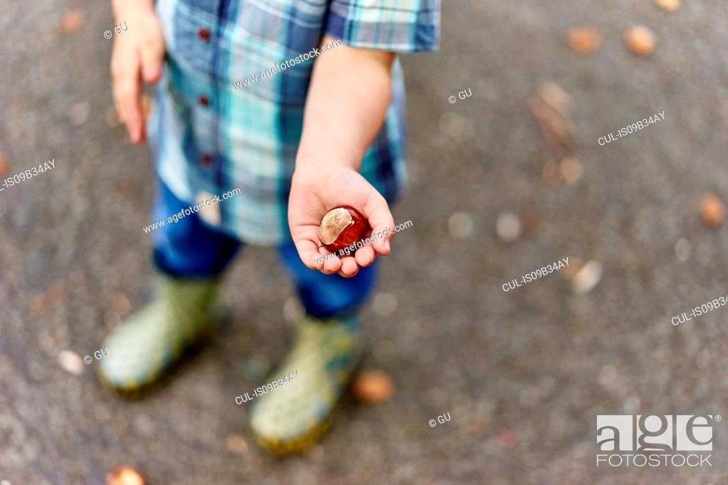 Stock Photo: Cropped view of boy's hands holding conker.