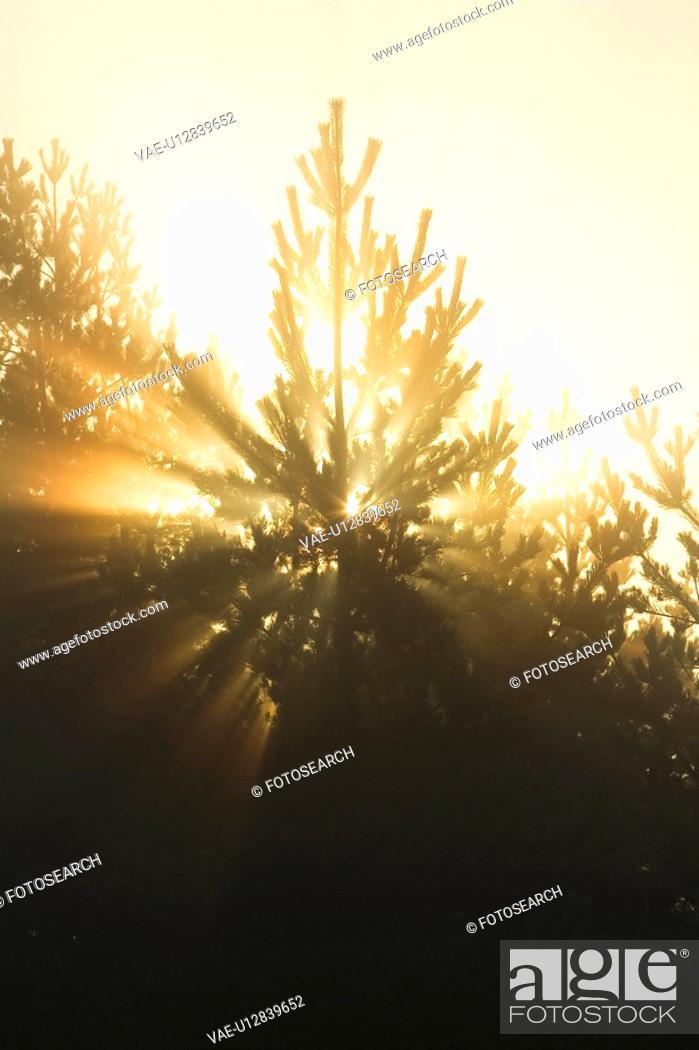 Stock Photo: Bright, Generic Location, Lens Flare, Light Beam.