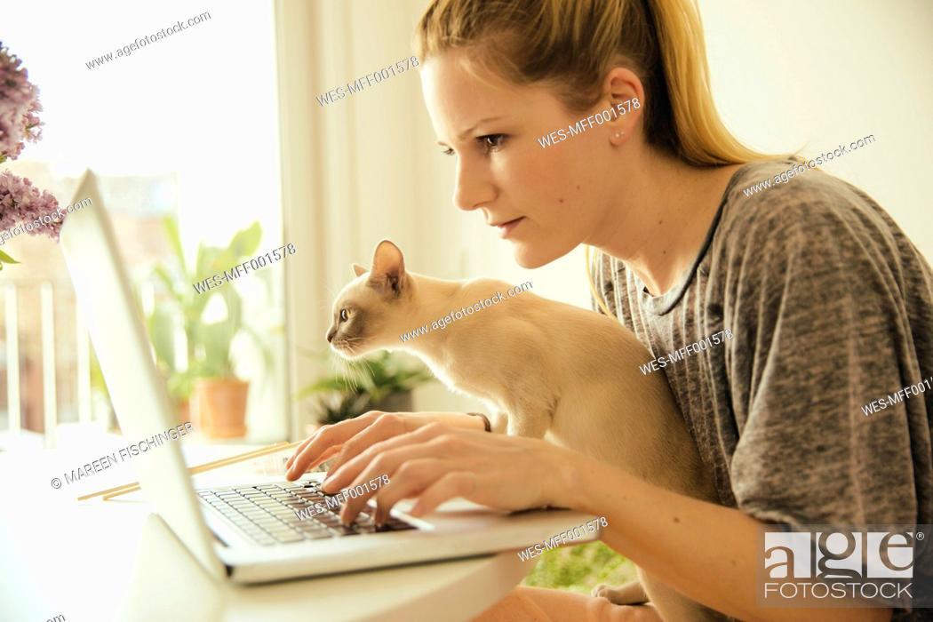Stock Photo: Woman with Burmese cat using laptop.