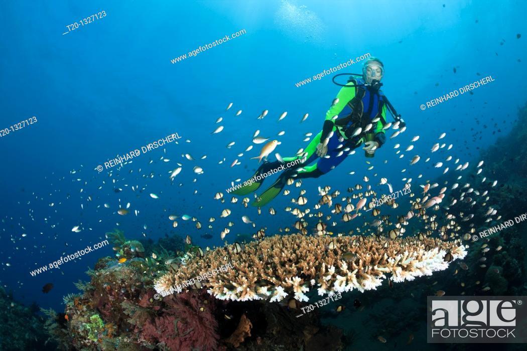 Stock Photo: Scuba Diving at Bali, Alam Batu, Bali, Indonesia.