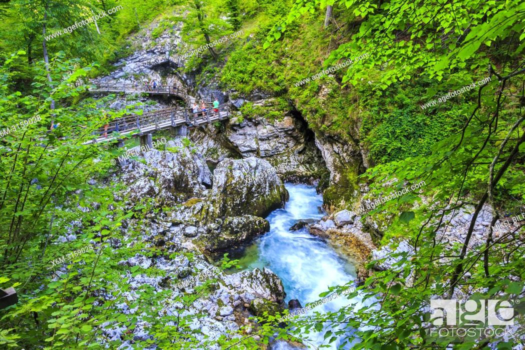 Stock Photo: Vintgar Gorge. Upper Carniola region. Slovenia, Europe.