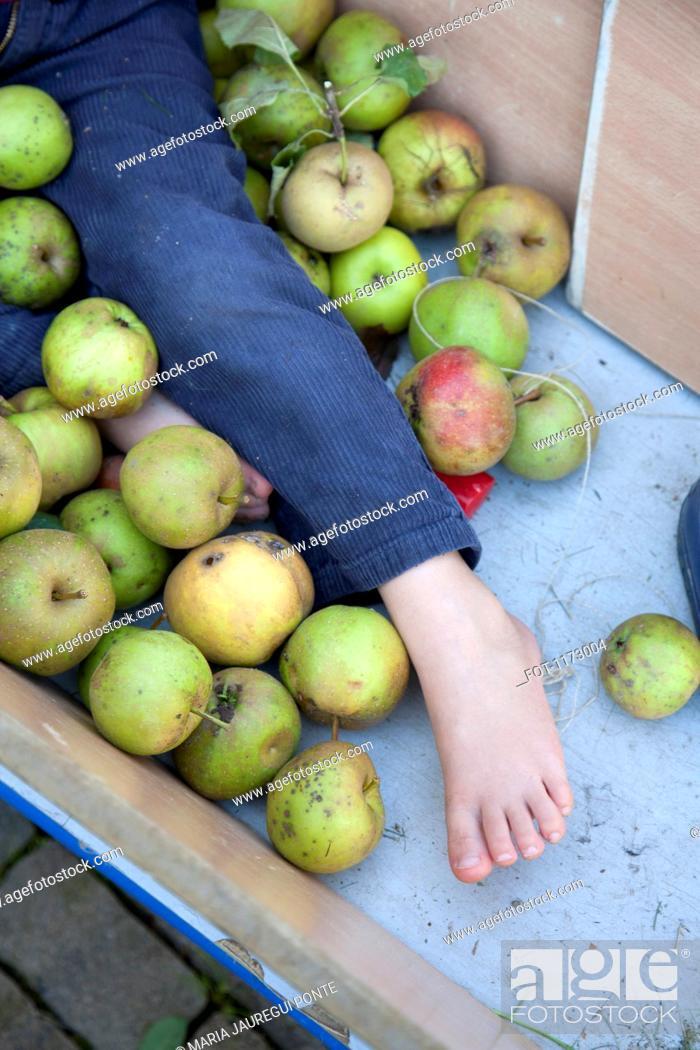 Stock Photo: Boy lying among apples in apple cart.