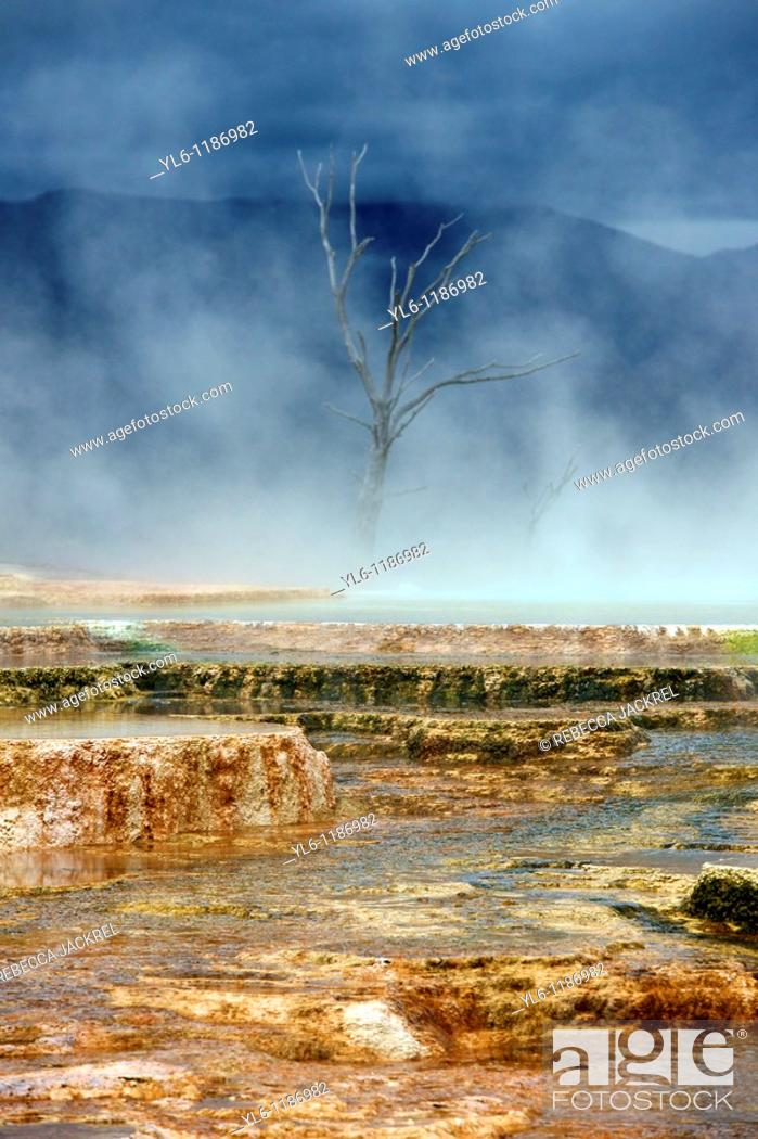 Stock Photo: North America, USA, Wyoming, Yellowstone National Park, Mammoth Hot Springs  Terrace formed by thermophile bacteria.