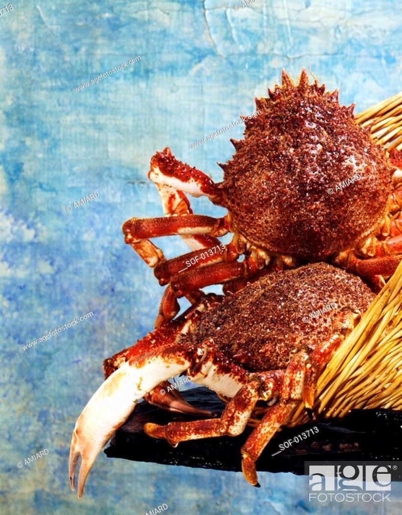Stock Photo: spider crab.