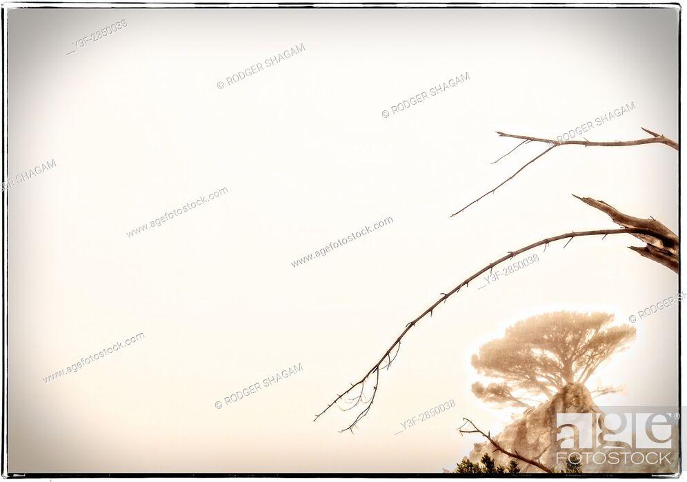 Stock Photo: Broken branches in the morning sky.