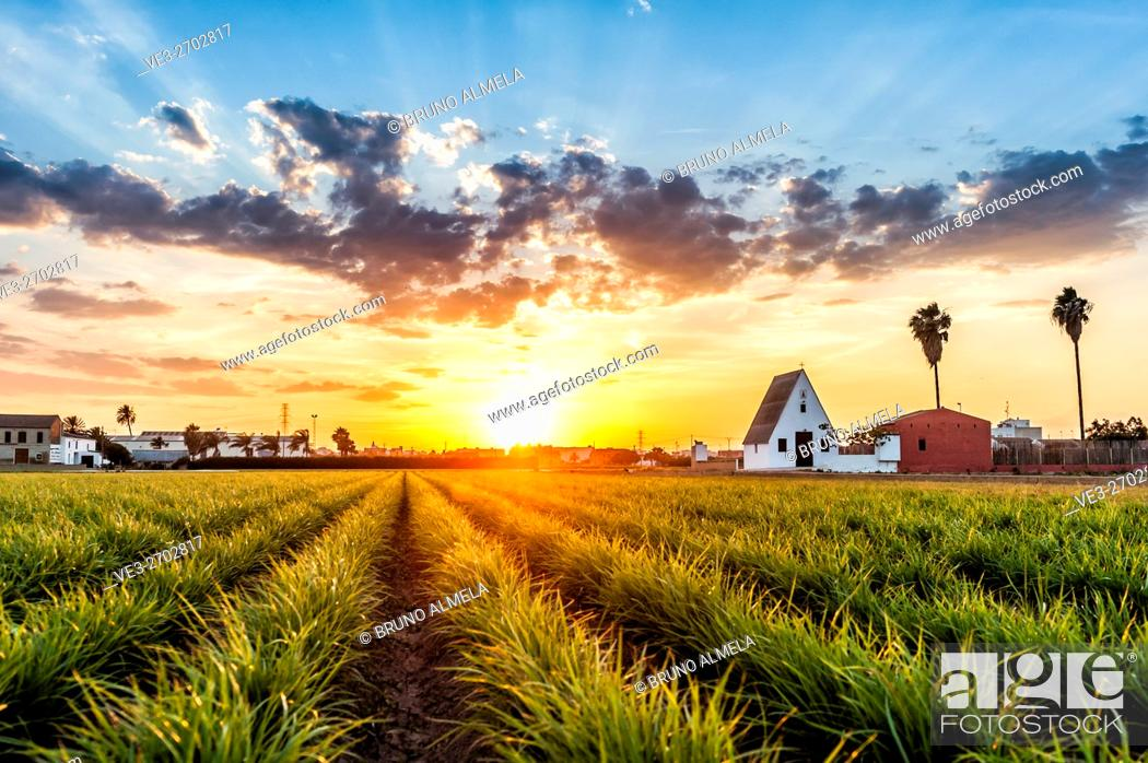 Imagen: Sunset in a field of tiger nuts, near Alboraya. The Barraca is the typical house in this region near Valencia, Valencian Comunity, Spain.