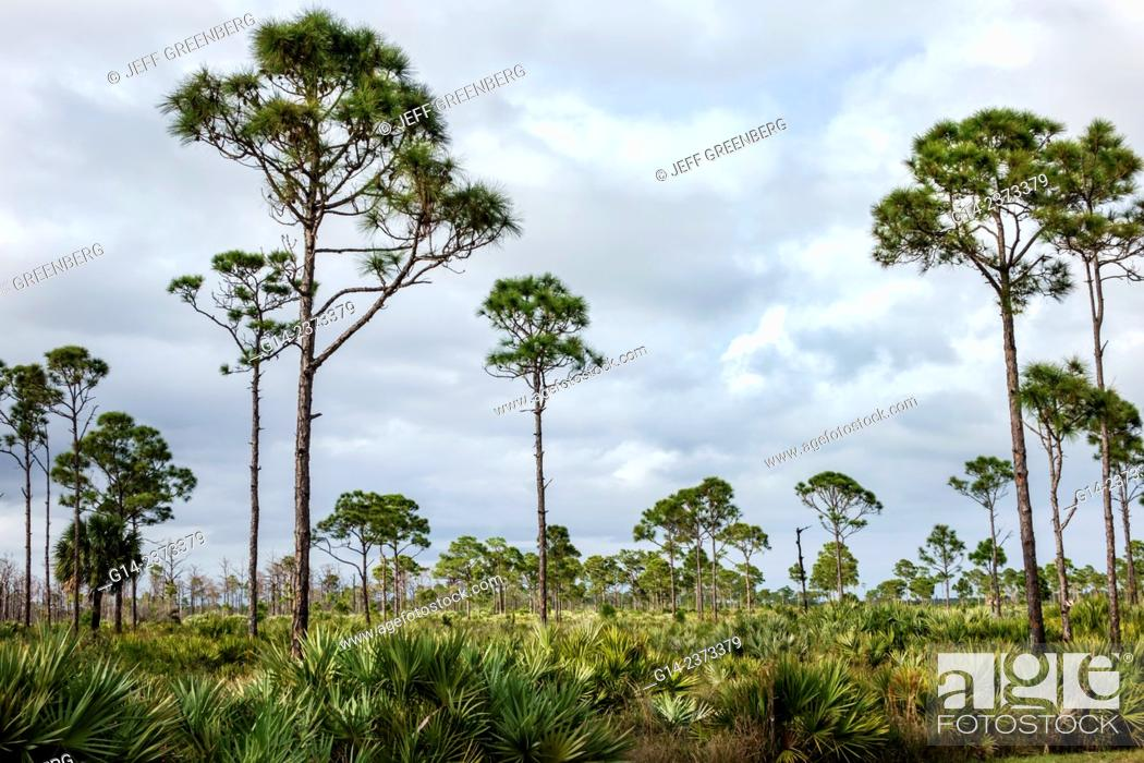 Florida, Port Saint St. Lucie, Savannas Preserve State Park, Slash ...