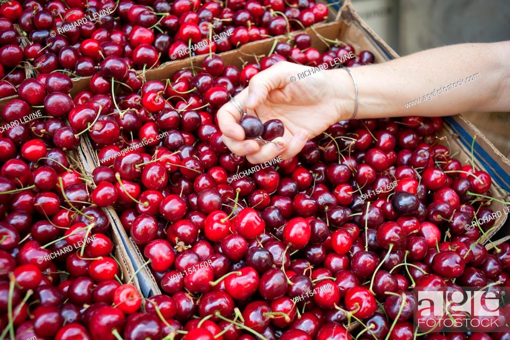 Stock Photo: A shopper cherry picks cherries at a supermarket in New York.