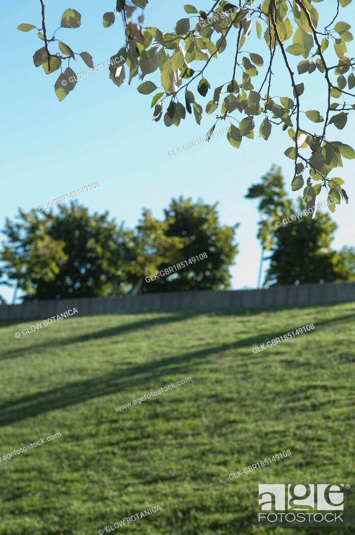 Stock Photo: Trees in a grassland.